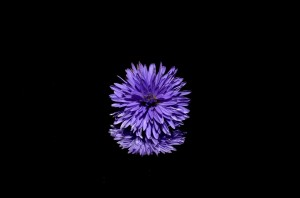 aster-188045_960_720